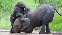 Elephant and baby calf